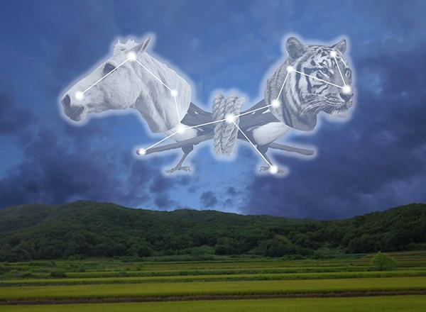 Humann Tiger Horse AR